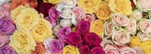 Floral Background. Pink, Yellow,  Red And Orange Roses.