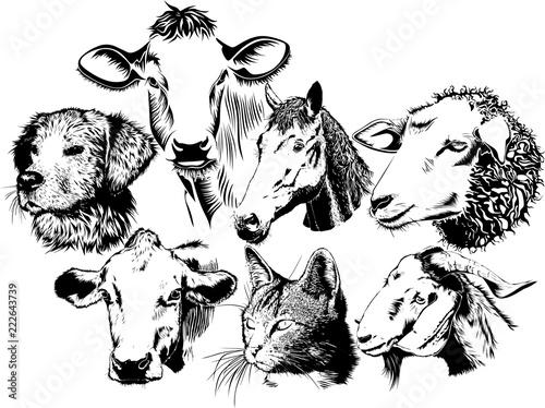 哺乳類動物のイラスト
