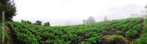 Fotografie, Obraz Panorama de cultivo