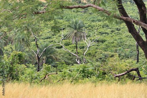 Spoed Foto op Canvas Olijf landscape