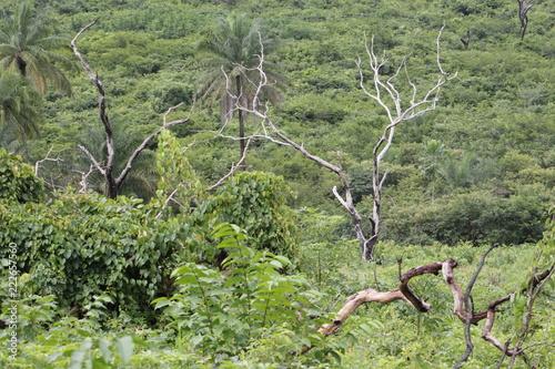 Fotobehang Olijf african landscape