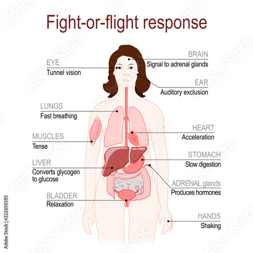 fight-or-flight response. stress response system Canvas Print