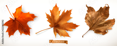 Fototapeta Maple leaf. 3d realistic vector icons obraz
