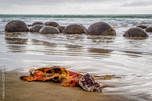 Moeraki boulders in New Zealand with colourful seaweed frond in the foreground Wallpaper Mural