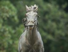 Cavallino Ranch
