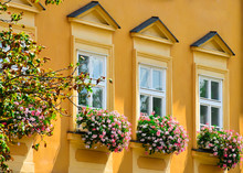 Windows With Flower Pots