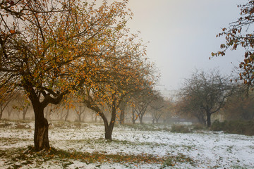 autumn background foggy garden covered with first snow