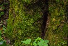 Texture Of Moss On Tree Stump
