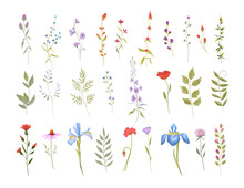 Collection Of Wild Flowers. Se...