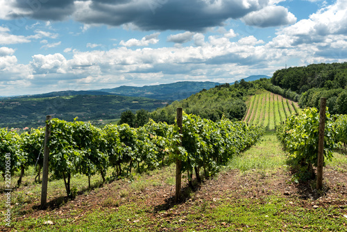 Serbian rural Landscape with vineyards and hills