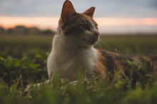 Cat In A Field Of Grass At Sun...