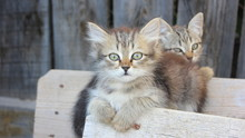Couple Of Kittens On A Board