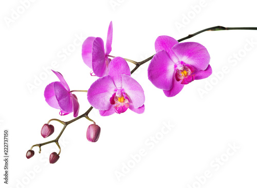 Fotografia, Obraz Pink orchid on a white background