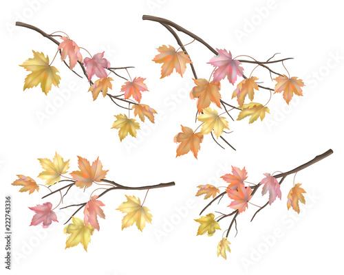 Fotomural Set of maple autumn leaves