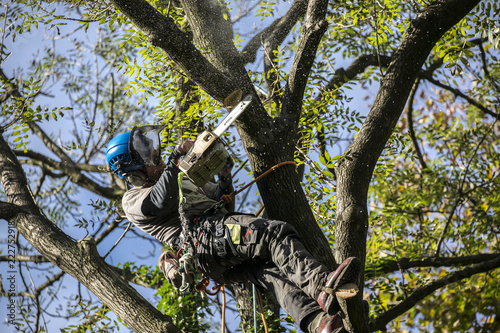 Tree Surgeon Canvas Print