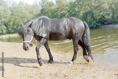 Fotografie, Obraz  Billy, ein Dale Pony