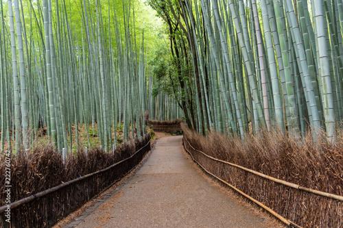 In de dag Zwart Bamboo forest in Arashiyama, Japan