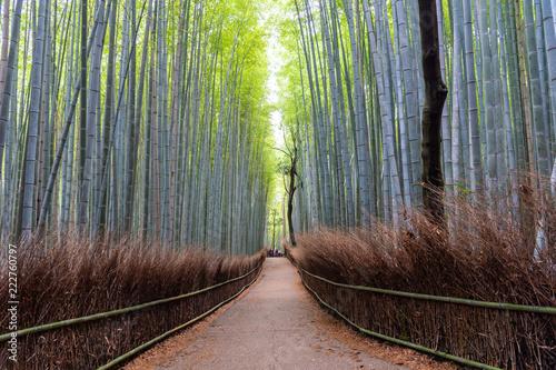 Foto op Plexiglas Bamboe Bamboo forest in Arashiyama, Japan