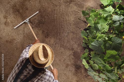 Valokuva man farmer working with rake in vegetable garden, raking the soil near a cucumbe
