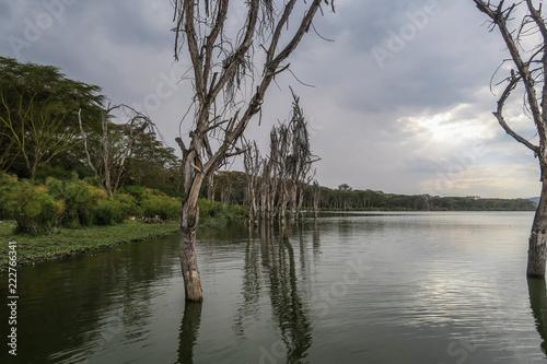 natury-scena-przy-jeziorem-wiktorii-w-kenja-afryka