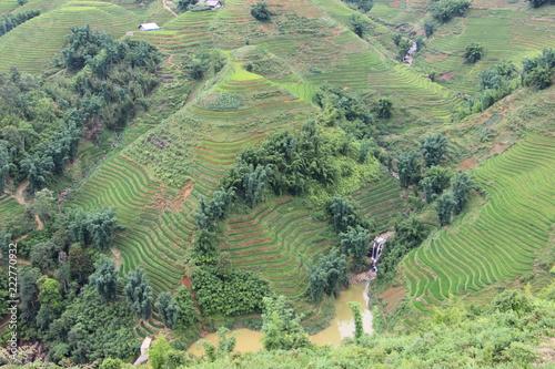 Fotobehang Olijf vietnam