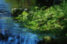 緑の小川 -愛媛県西条市ホタルの里にて-