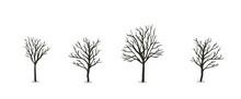 Naked Autumn Tree Set. Flat Vector Illustration. Isolated On White Background.