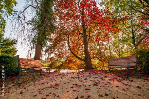 Fotografie, Obraz  Bänke im Herbst