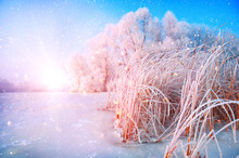 Beautiful Winter Landscape Scene Background With Snow Covered Trees And Iced River. Beauty Sunny Winter Backdrop. Wonderland. Frosty Trees In Snowy Forest