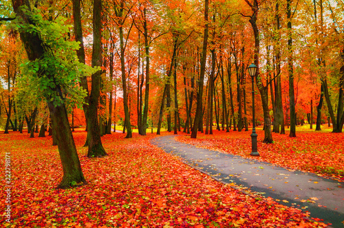 Fall landscape with colorful fall trees and orange fallen leaves. Fall deserted alley