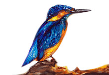 Kingfisher Bird Water Color Drawing
