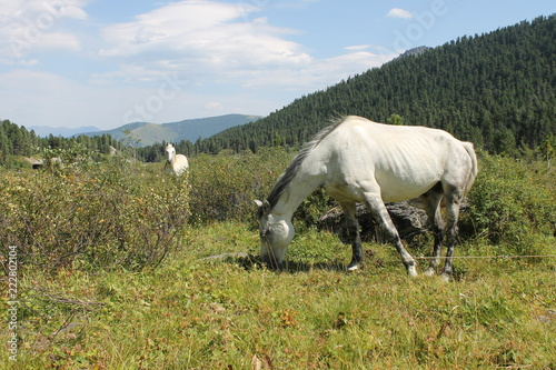 Photo  horse in the mountains