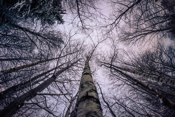 Fototapeta Under the trees