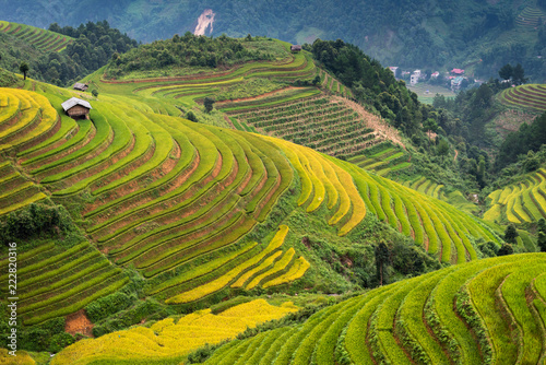 In de dag Rijstvelden Rice fields on terraced of Mu Cang Chai, YenBai, Vietnam.