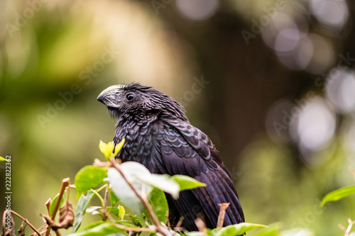 Deurstickers Vogel Colonial city of Topolobampo, Mexico. Black bird resting in a tree.