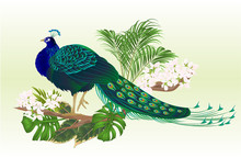 Peacock Beauty Exotic Bird Natural And Tropical Flowers Watercolor Vintage Vector Illustration Editable Hand Drawn