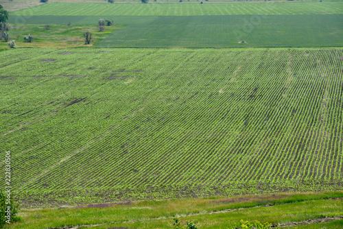 Fotobehang Olijf Landscape of rural fields are in spring sunlight, Dnepr, Ukraine.