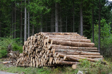 Logs In A Woodpile