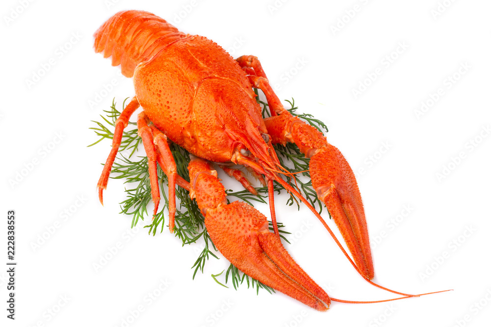 Fototapeta Boiled crayfish with dill isolated on white background