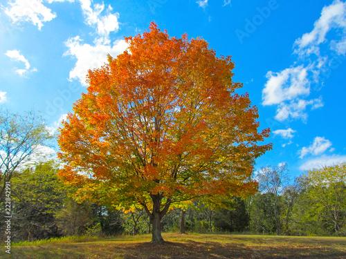 Red leaves of maple tree. Beautiful autumn landscape in a public par