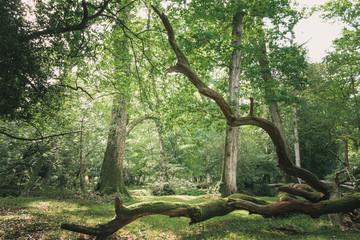 Fototapeta Dense summer forest