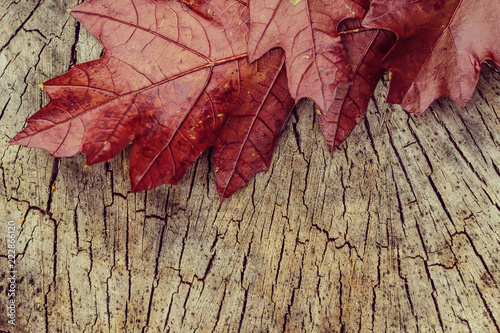 Photo  red leaves and yellow heart shape on a wooden stump, close up