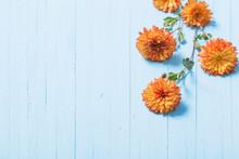 Orange Chrysanthemums On Blue Wooden Background