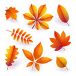 Set of isolated bright orange autumn fallen leaves. Elements of fall foliage. Vector