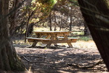 Picnic Bench Hidden In A Clear...