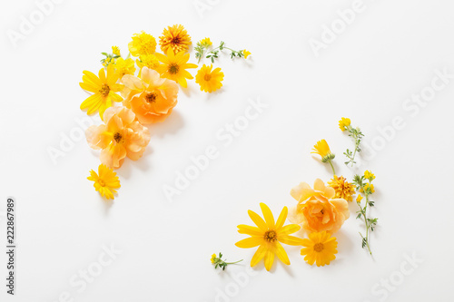 Obraz yellow  flowers on white background - fototapety do salonu