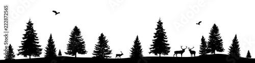 Fototapeta Forest banner obraz