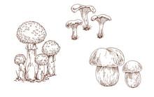 Mushrooms Orange Cap Boletus, Fly Agaric And Chanterelles Contoured Isolated On White Background. Brow Contour. Seasonal Autumn Collection Illustration.