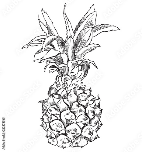 Fototapety, obrazy: Vector hand drawing fruit-10