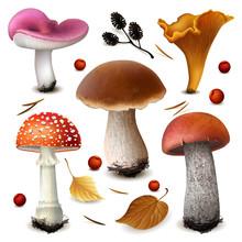 Mushrooms Vector Set